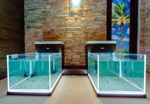 Wellness PARADISE, Garra Rufa, fish, ryby, liečive, psoriaza, kúpeľ, relax, na chorobu, nohy, masáž, massage, foot